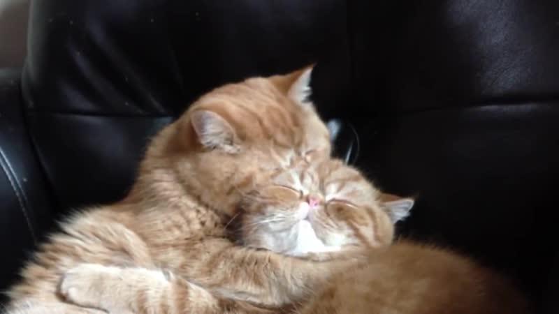 горячий кошачий поцелуй,какая любовь.....