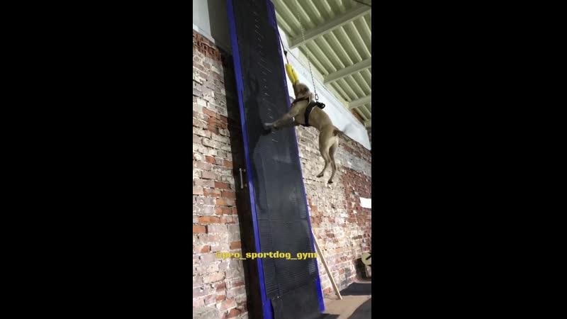 Страховка Wall Climbing!