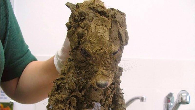 Рабочие подумали, что нашли грязного щенка, но когда они его почистили, их ждал сюрприз
