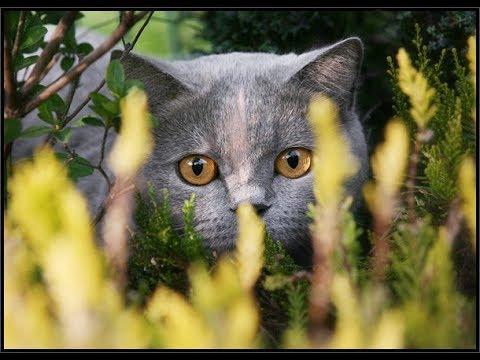 Коты и люди Жизнь в радость 🐈🐈🐈🐈🐈💝💝💝💝💝🐱🐱🐱🐱🐱💞💞💞💞💞🌟🌟🌟