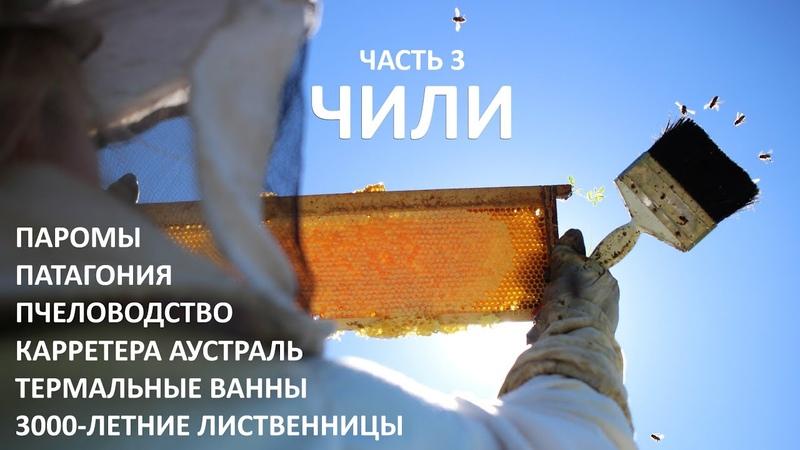 Чили, ч.3: начало Патагонии, пчеловодство, термальные ванны, Карретера Аустраль