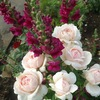 Оренбург_садовод: цветы, саженцы для сада