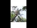 Прыжок с высоты 12 метров тай парк Кантри Хоум