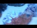 Океанариум, часть 1 (День музеев: 18 мая 2018)