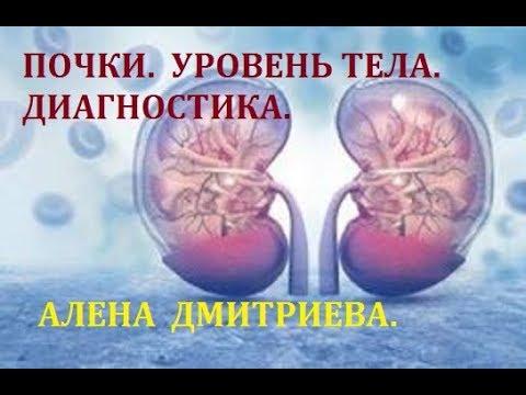 Почки. Уровень тела. Алена Дмитриева.