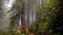 Поющий лес Пение лесных птиц Отдых и расслабление в живом лесу