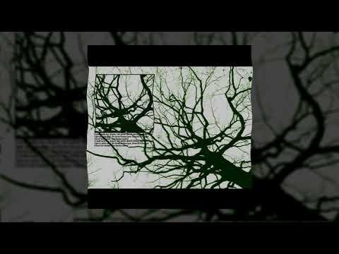 бимо корни prod by firefox Official Audio