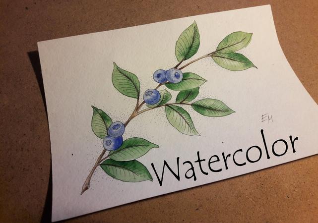 Рисунок Акварелью и линером Веточка черники / Drawing Watercolor and marker Sprig of blueberries