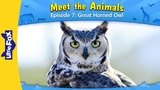 Meet the Animals 7 Great Horned Owl Wild Animals Little Fox Animated Stories for Kids