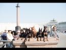 Цвергпинчеры в Санкт Петербурге