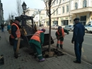 На ул.Кремлевская в Казани появится 221 молодая липа