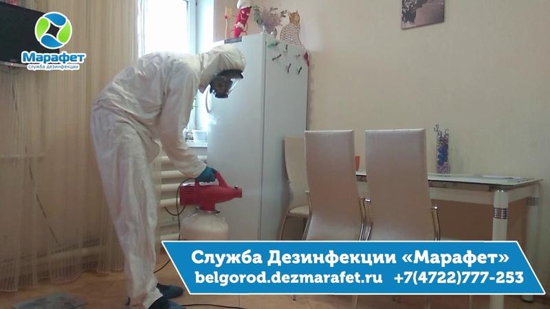 Как избавиться от мошек в Белгороде