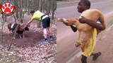TOP Animal Rescues, Emotional Inspiring Funny Will Melt Your Heart Compilation. REAL LIFE HEROES