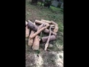 В парке Зеленая роща срубили деревья