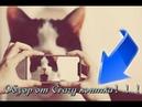 Приколы № 9 от канала Crazy Catz Ахуеваю по кошачьи,обзор Crazy котика
