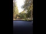 Сабрина Никитинчук Live