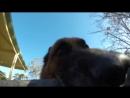 Пес отобрал у своего хозяина видеокамеру и устроил веселый забег во дворе