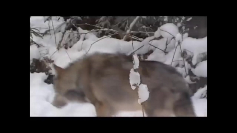 ИВАН КУЧИН ЧЕЛОВЕК В ТЕЛОГРЕЙКЕ