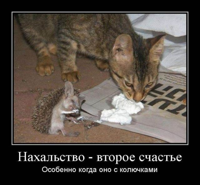 http://pp.userapi.com/c845221/v845221381/9c73a/nQNWlI1_GAw.jpg