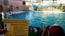 Визиточка с холодильничком показывает Вам Адлеровский дельфинарий. Яркое, смешное и удивительное представление. Дельфины , белуга и морские котики ...