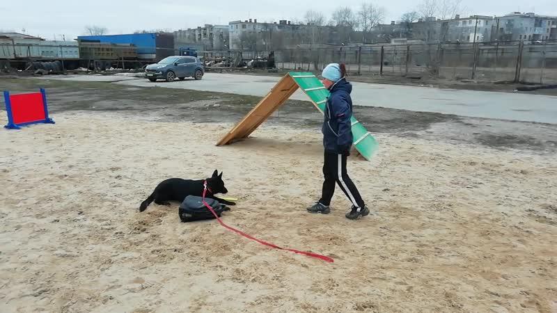 немецкая овчарка Ланса 6 мес учит команду Место