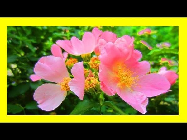Цветущие кустарники и деревья🌺 🌸 Этот прекрасный мир!