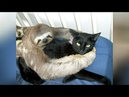 Super WEIRD CUTE ANIMAL FRIENDSHIPS I BET you will LAUGH FOR HOURS