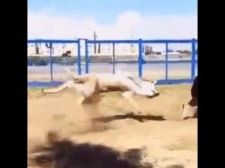 image собака нинзя