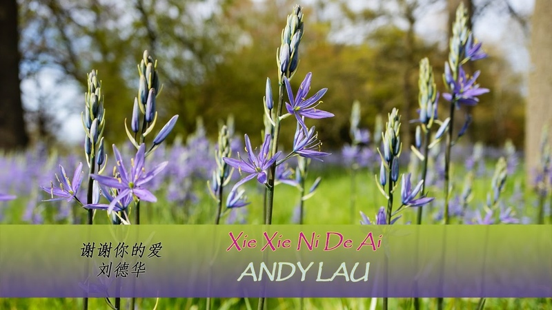 Xie Xie Ni De Ai lyrics - Andy Lau (Pinyin English translation) Learn Chinese by songs