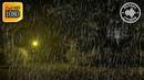 Звуки дождя, шум ветра и пение птиц в ночном лесу. Звуки Природы: 10 часов для сна