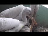 Редкий птенец вылупился в Московском зоопарке