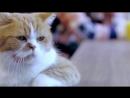Sad cat feat. Михаил Шуфутинский - 3-е сентября.mp4
