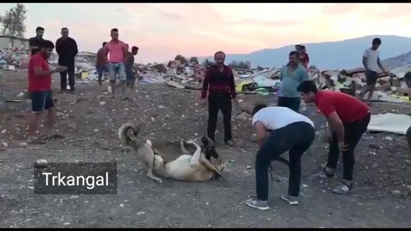 Alihan FİNİKELİ KATİL DARBE KUMLUCA'DAN NAMALUP RAMBO