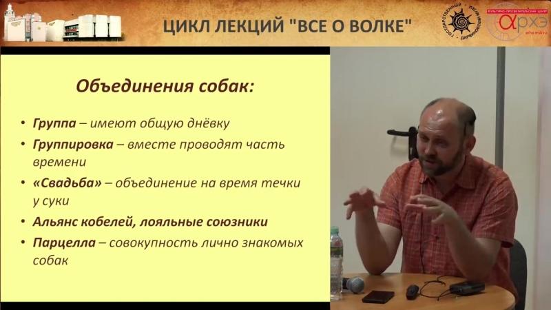 Андрей Тупикин- Бездомные собаки глазами биолога