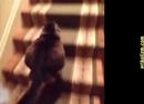 Приколы с котами и кошками для поднятия настроения! Подборка приколов и неудач со смешными котейками · coub, коуб