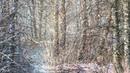 Музыка: Райский лес - Пение птиц - авт вид И. Журавлева