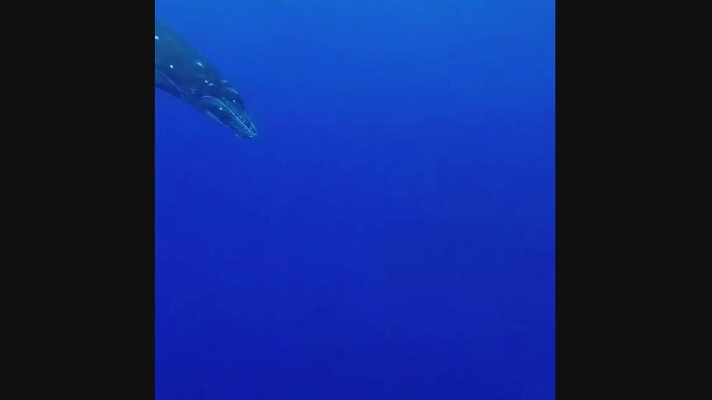 Ocean_lovers_united_BsgAzULlrMv.mp4