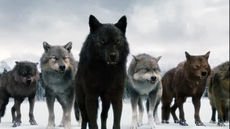 В танце с волками, автор - Оксана Фокина, муз. и исп. - Эдуард Новиков