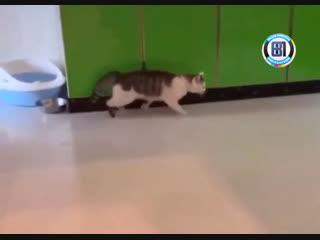 Кажется у моего кота плохое соединение