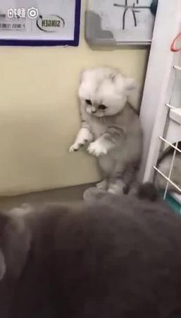 Котёнок Руди а ну пошла нахуй не не не руки проч не трожте меня пиздуйте лесом Ебанутые ебанушки из отбросов