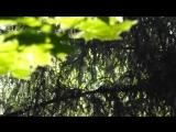 Майский лес пыльца, наверное