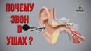 Шум в голове, шум в ушах. Причины, симптомы, лечение тиннитуса