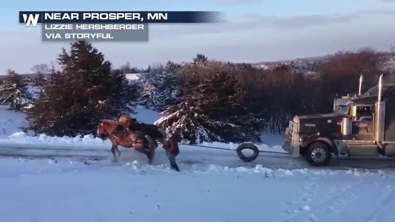 Что такое настоящая лошадиная сила или как вытащить свой грузовик (Миннесота, США). Декабрь 2018 года.