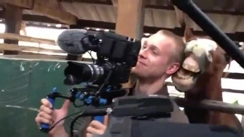 Конь задирает оператора