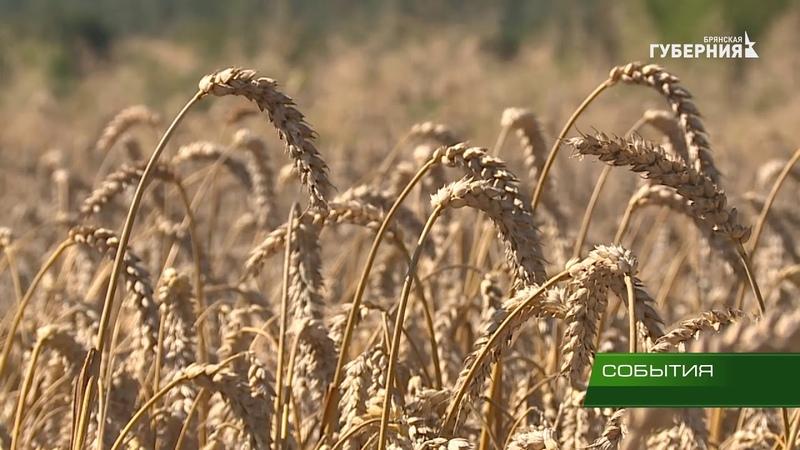 Сельхозпредприятия убирают зерновые, бобовые, картофель, рапс, овощи и лён 30 08 18