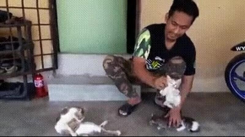 Тайский маг показывает как успокоить котят =)