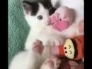 🐾 Счастливый котёнок!🐾 😍