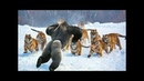 动物世界和伟大的战斗 物世界由相機記錄 如果沒有拍下這些場景,你永