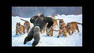 动物世界和伟大的战斗 - 物世界由相機記錄- 如果沒有拍下這些場景,你永