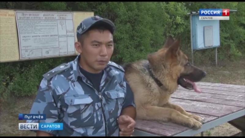 Служебных собак готовят в Пугачеве